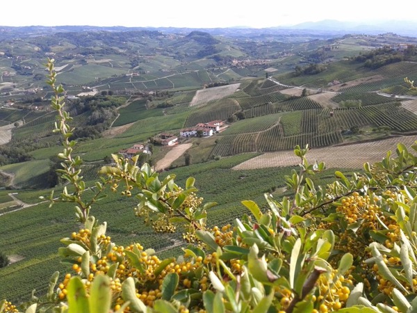 Alba and Langhe Full-Day Tour